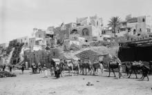قوافل التجاره بجانب شاطيء يافا