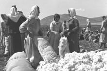 قرية كفر سابا العربية المهجرة قضاء طولكرم 1937